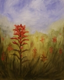 Indian-Paintbrush